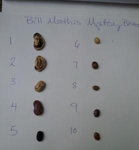 mysterybeans (5)